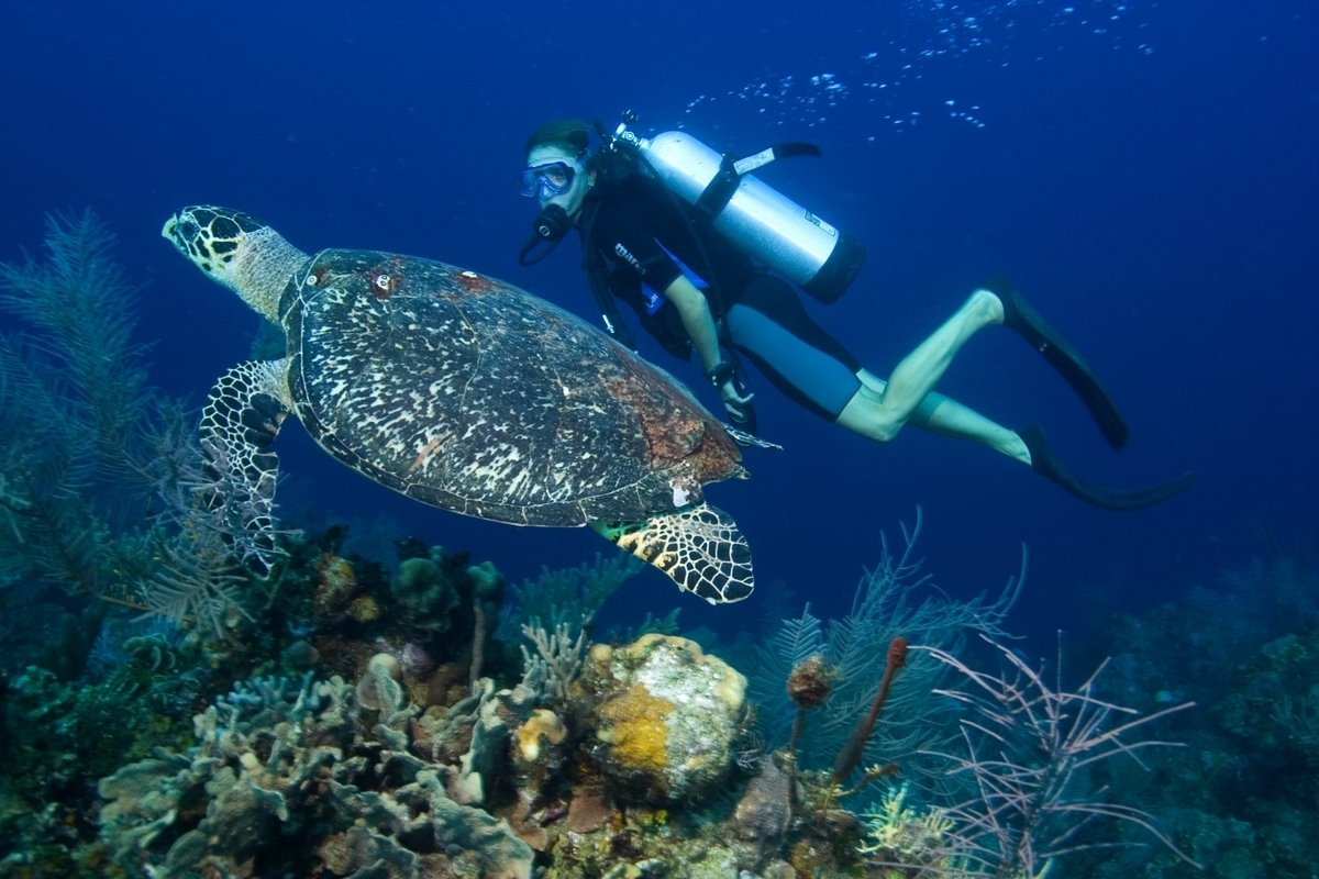 Diver_Turtle[1]