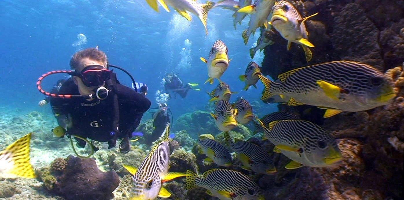 diving-2014-free-15[1]